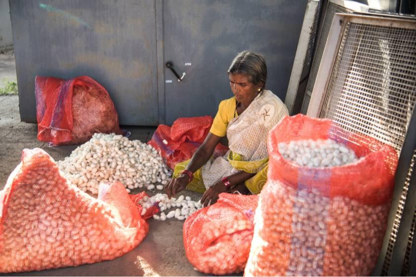 Sericulture India